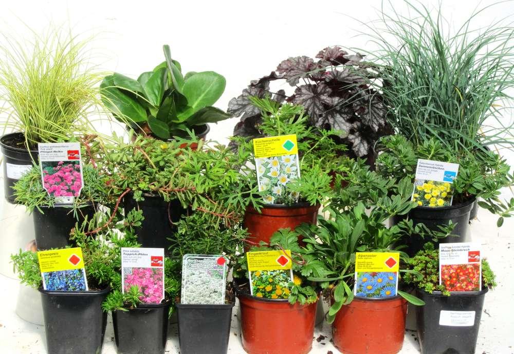 Pflanzen Set für Steingärten ca 5 m² - Pflanzen Versand für die ...