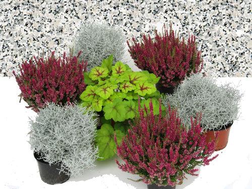 grabbepflanzung einzelgrab wechselbepflanzung herbst winter versand harro 39 s pflanzenwelt. Black Bedroom Furniture Sets. Home Design Ideas