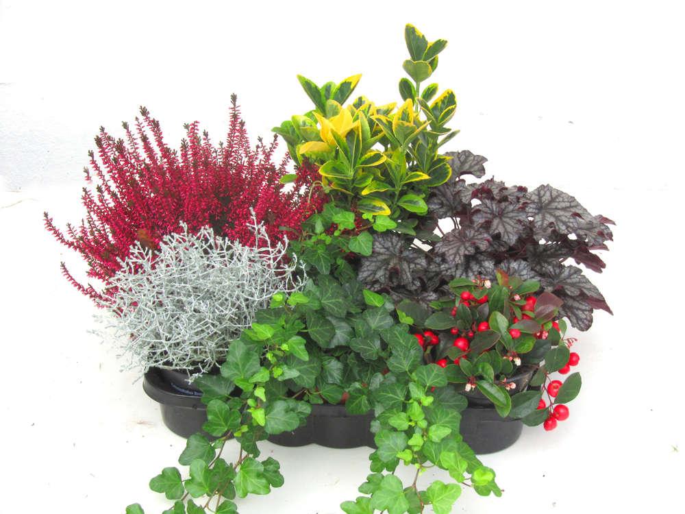 Balkonpflanzen Set Pflanzen Versand Harro S Pflanzenwelt Kaufen