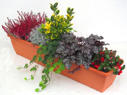 Bepflanzter Balkonkasten 80 Cm Wintergrün Im