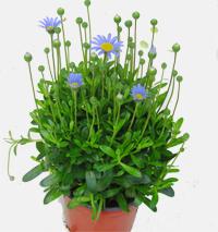 grabbepflanzung sommer pflanzen versand f r die besten. Black Bedroom Furniture Sets. Home Design Ideas