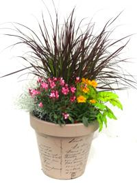 Zubehor Zu Buntes Pflanzen Set Fur Kubel O 35 50 Cm