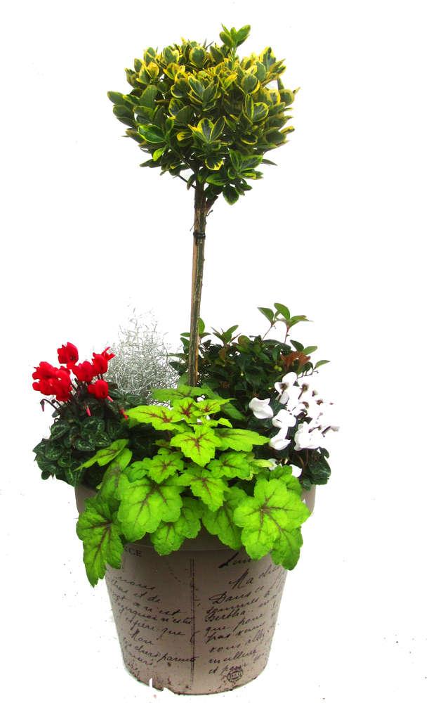 winterhartes Pflanzen-Set für Kübel 35-50 cm - Pflanzen Versand ...