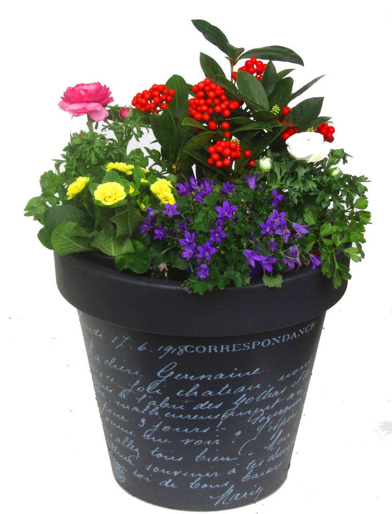 Pflanzen bestellen awesome jpg with pflanzen bestellen for Pflanzen liefern