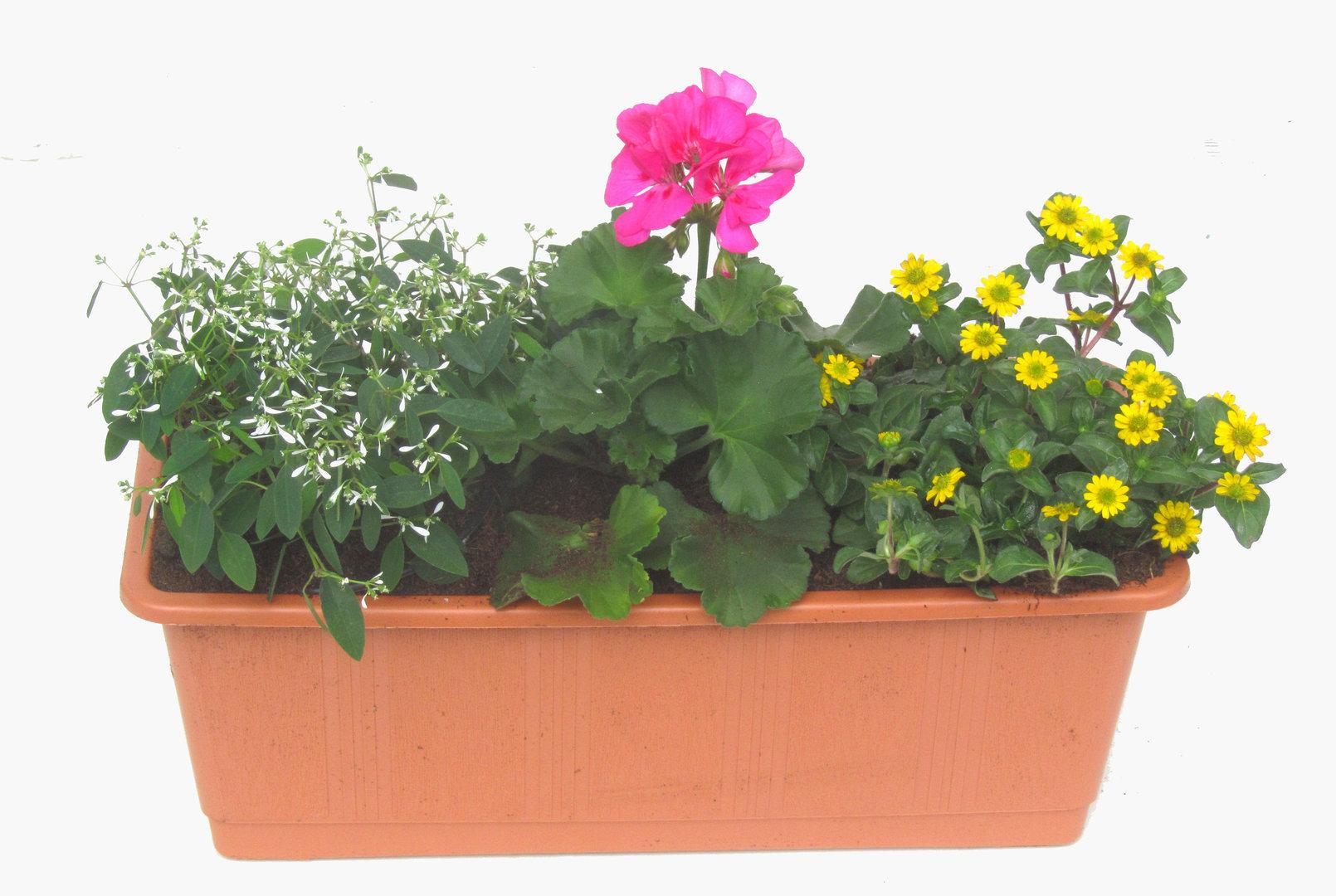balkonpflanzen set f r balkonk sten 40 60 cm lang sommer. Black Bedroom Furniture Sets. Home Design Ideas