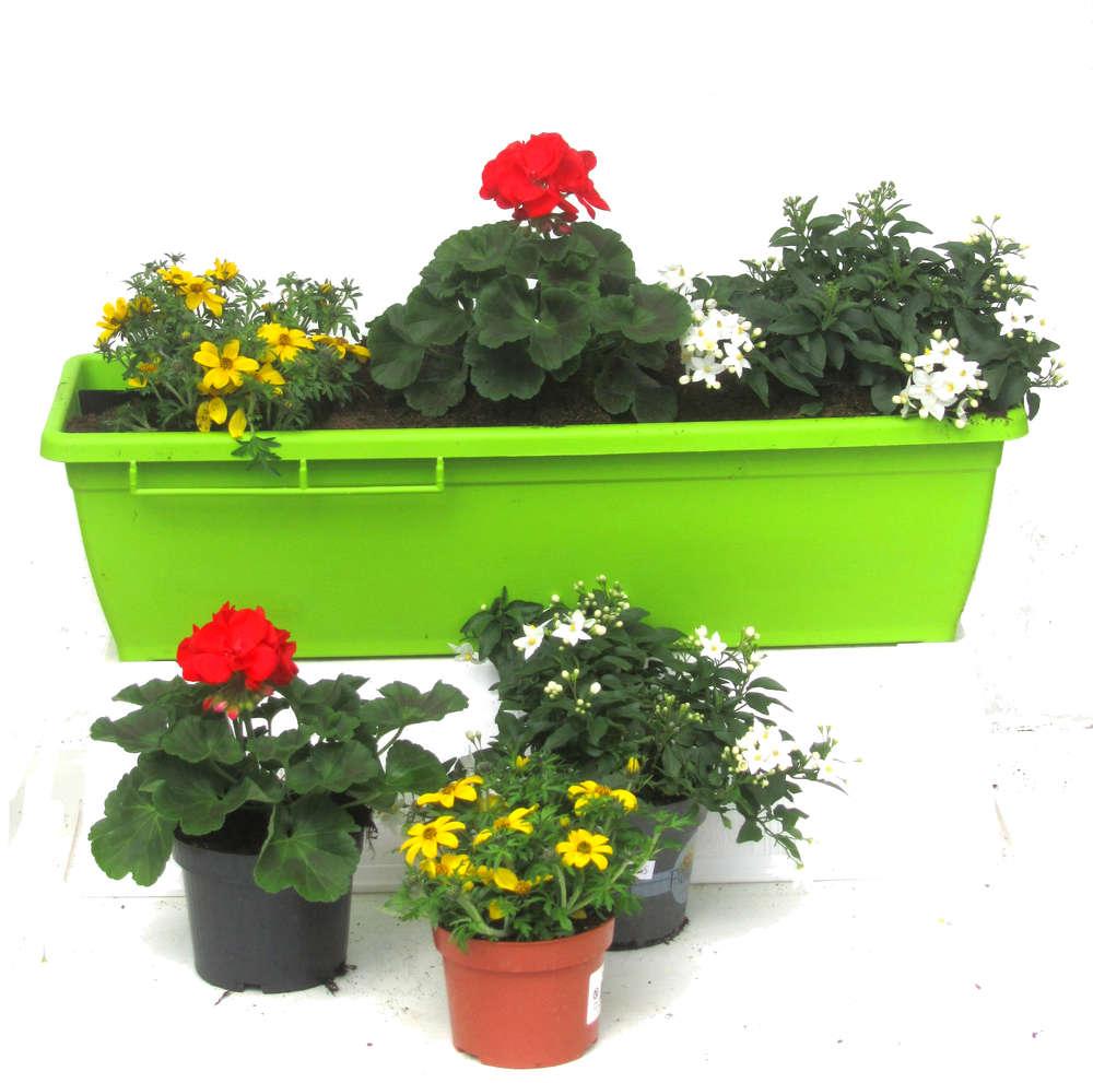 Balkonpflanzen Set Fur Balkonkasten 60 Cm Lang Sommer Pflanzen
