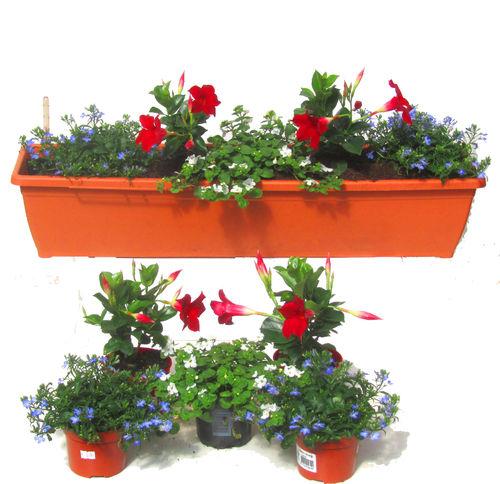 bepflanzte balkonk sten pflanzen versand harro 39 s. Black Bedroom Furniture Sets. Home Design Ideas