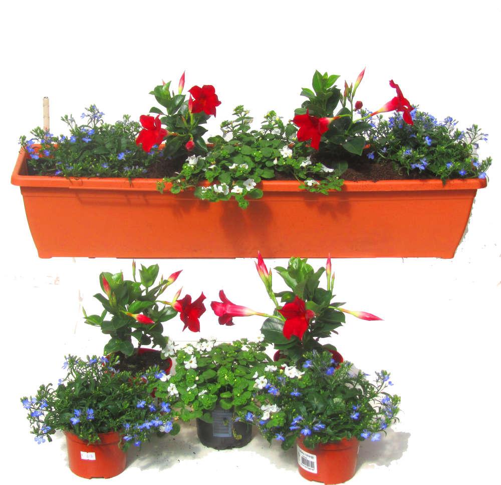 Berühmt Balkonpflanzen-Set für Balkonkästen 80 cm lang Sommer - Pflanzen @RI_88