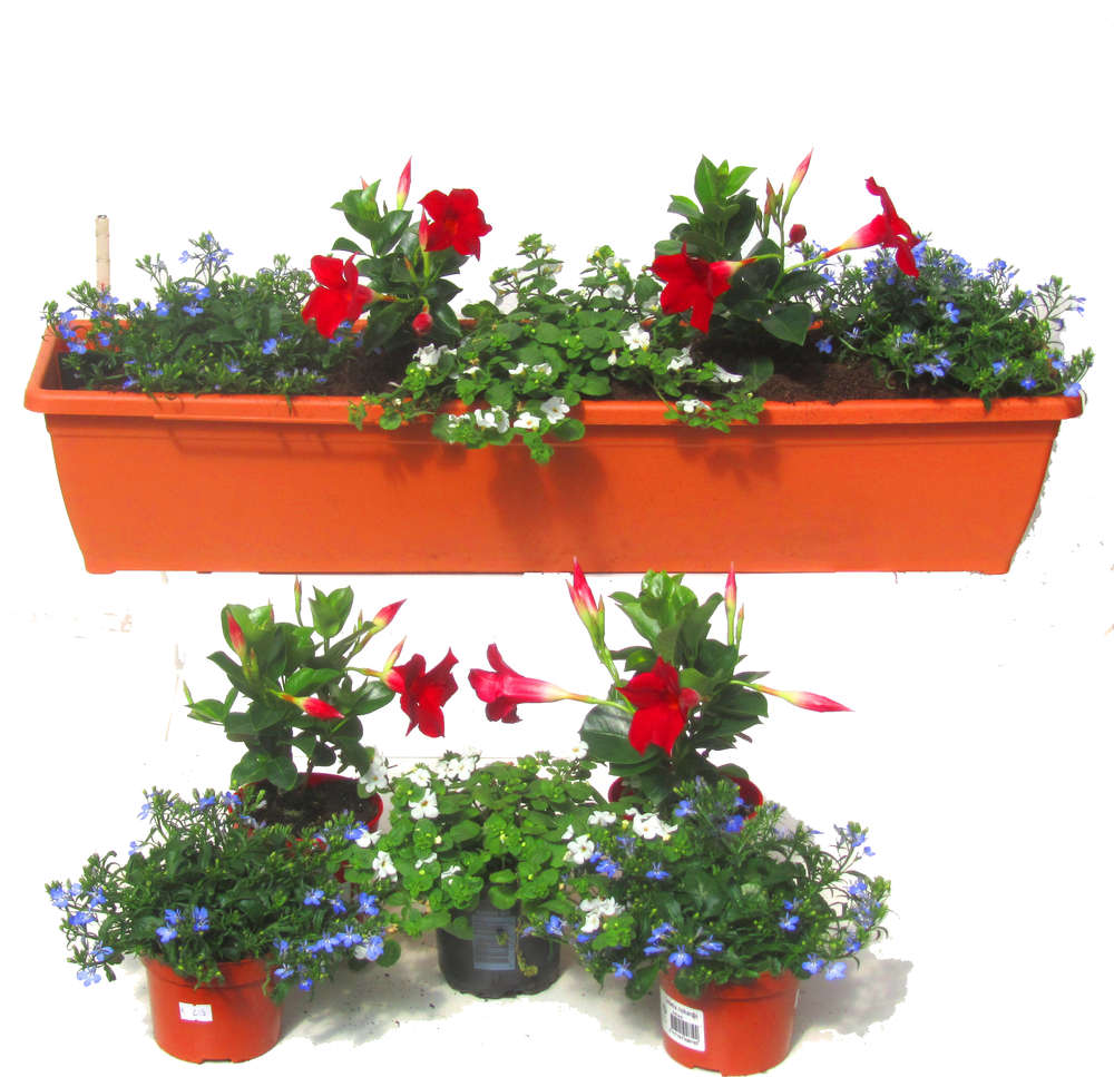 Balkonpflanzen Set Fur Balkonkasten 80 Cm Lang Sommer Pflanzen