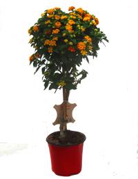 neu im pflanzenshop pflanzen versand f r die besten winterharten balkonpflanzen k belpflanzen. Black Bedroom Furniture Sets. Home Design Ideas