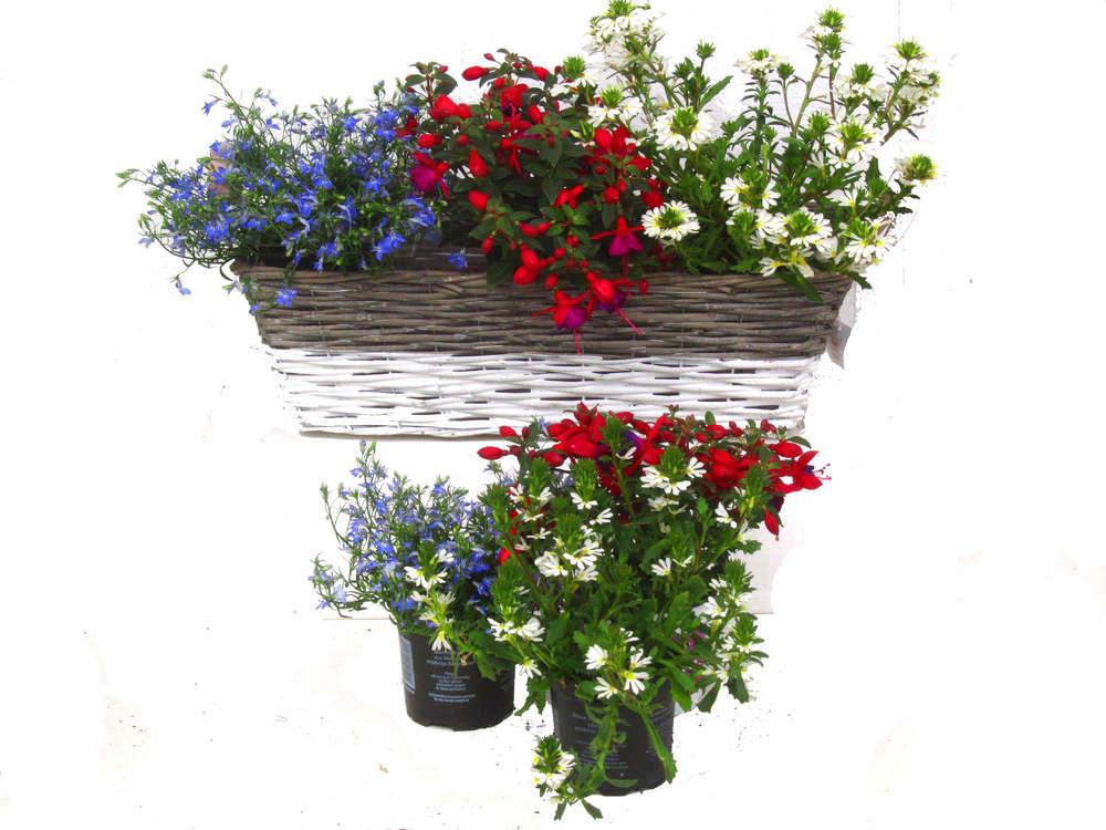 Zimmerpflanzen Schatten balkonpflanzen set für balkonkästen 60 cm lang schatten bis