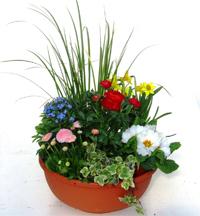 Grabbepflanzung Frühjahr Pflanzen Versand Für Die Besten