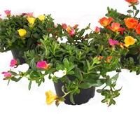 Grabbepflanzung Sommer Pflanzen Versand Für Die Besten