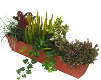 Bepflanzte Balkonkasten Pflanzen Versand Harro S Pflanzenwelt