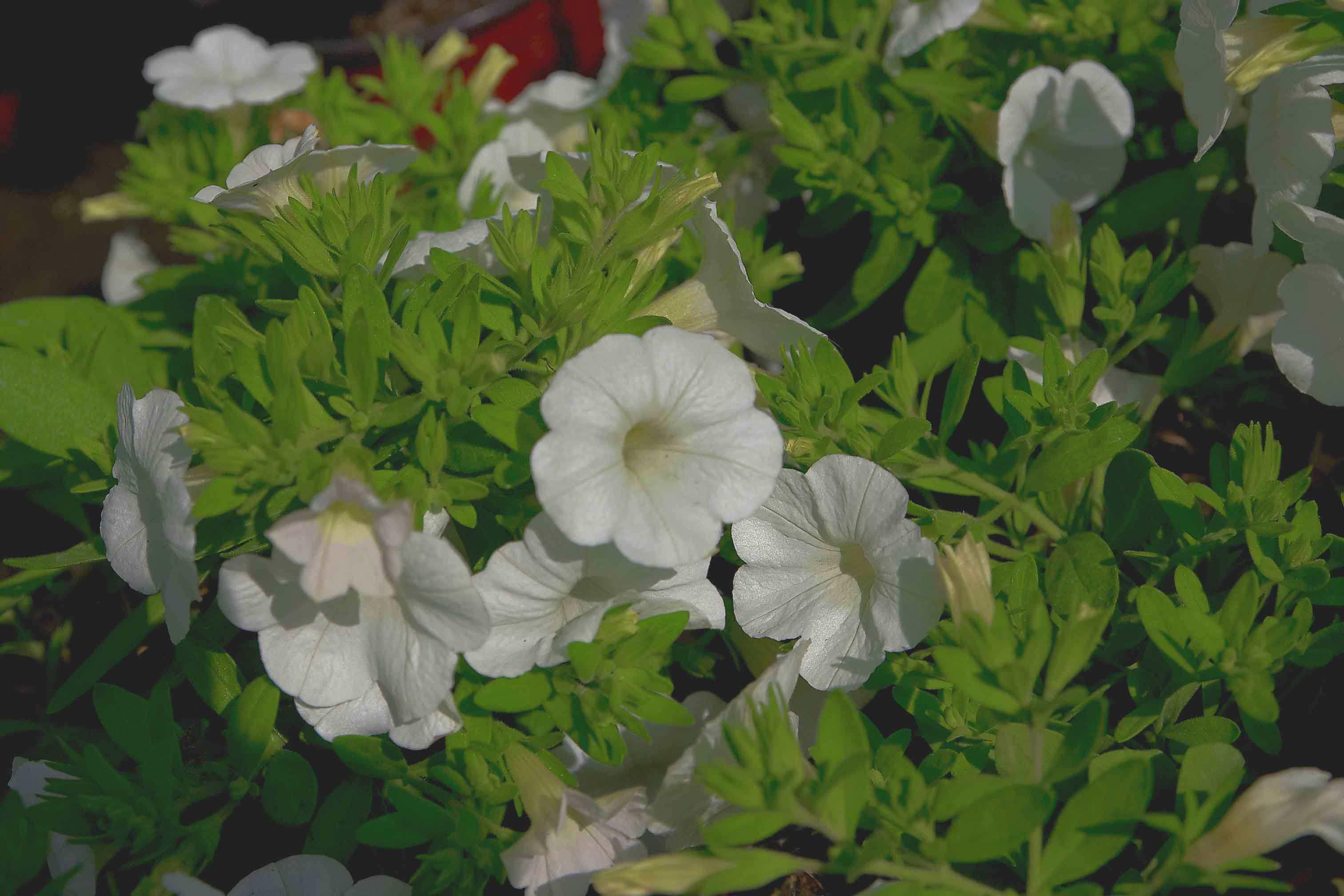 Zimmerpflanzen versand bestellen sie hydrokulturen mit for Pflanzen versand