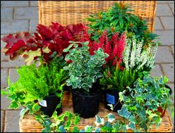 Pflanzen Kaufen Balkonpflanzen Zimmerpflanzen Obstbaume