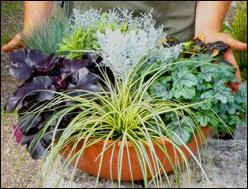 Grabbepflanzung online kaufen beispiele zum selbst for Ausgefallene zimmerpflanzen