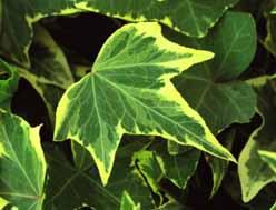 pflanzen kaufen balkonpflanzen zimmerpflanzen obstb ume harro 39 s pflanzenwelt. Black Bedroom Furniture Sets. Home Design Ideas