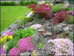 pflanz sets pflanzen versand harro 39 s pflanzenwelt kaufen bestellen online. Black Bedroom Furniture Sets. Home Design Ideas