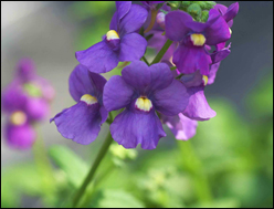 Balkonpflanzen Kaufen Pflanzen Sets Fruhjahr Sommer Herbst Winter
